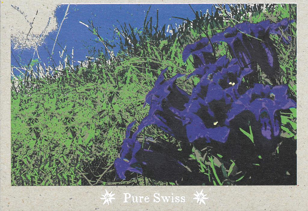 Postcards 51131 Pure Swiss Gentiane