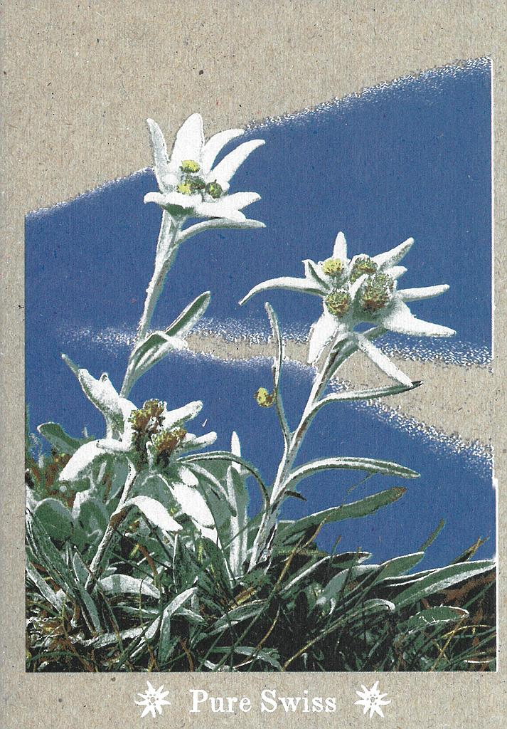 Postcards 51136 Pure Swiss Edelweiss