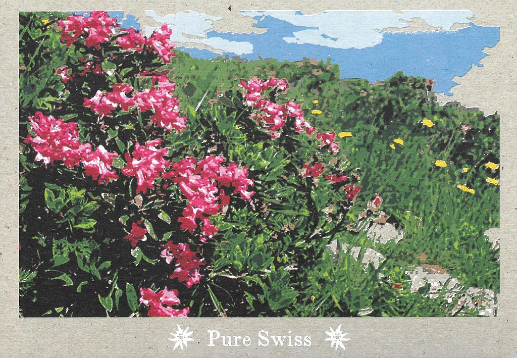 Postcards 51130 Pure Swiss roses des Alpes