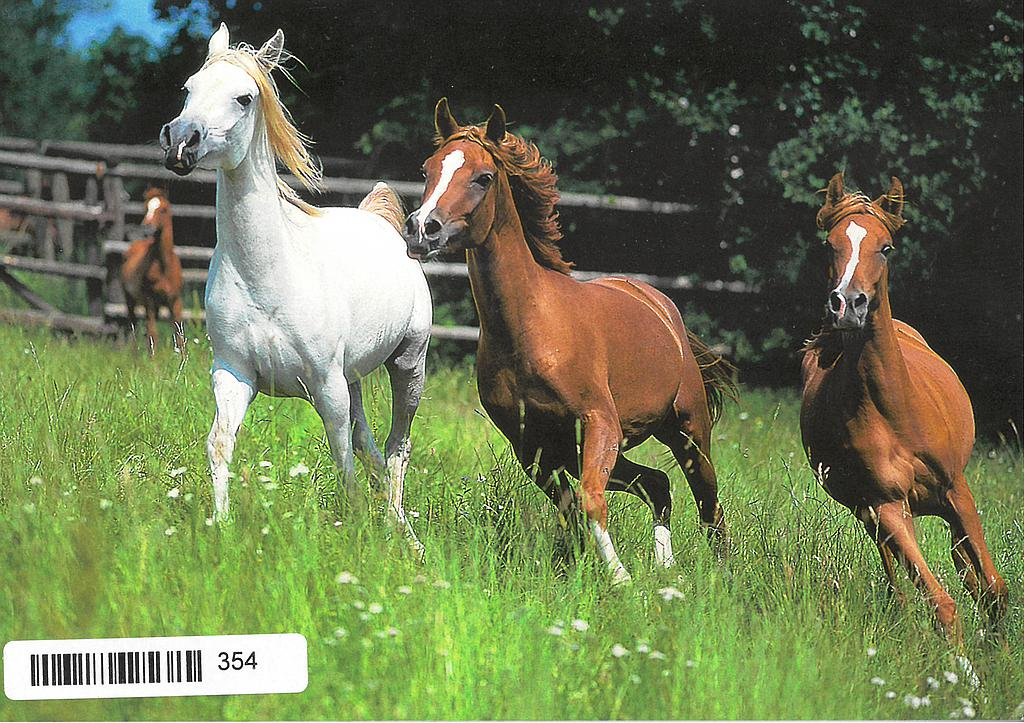 Postcards 00354 Chevaux