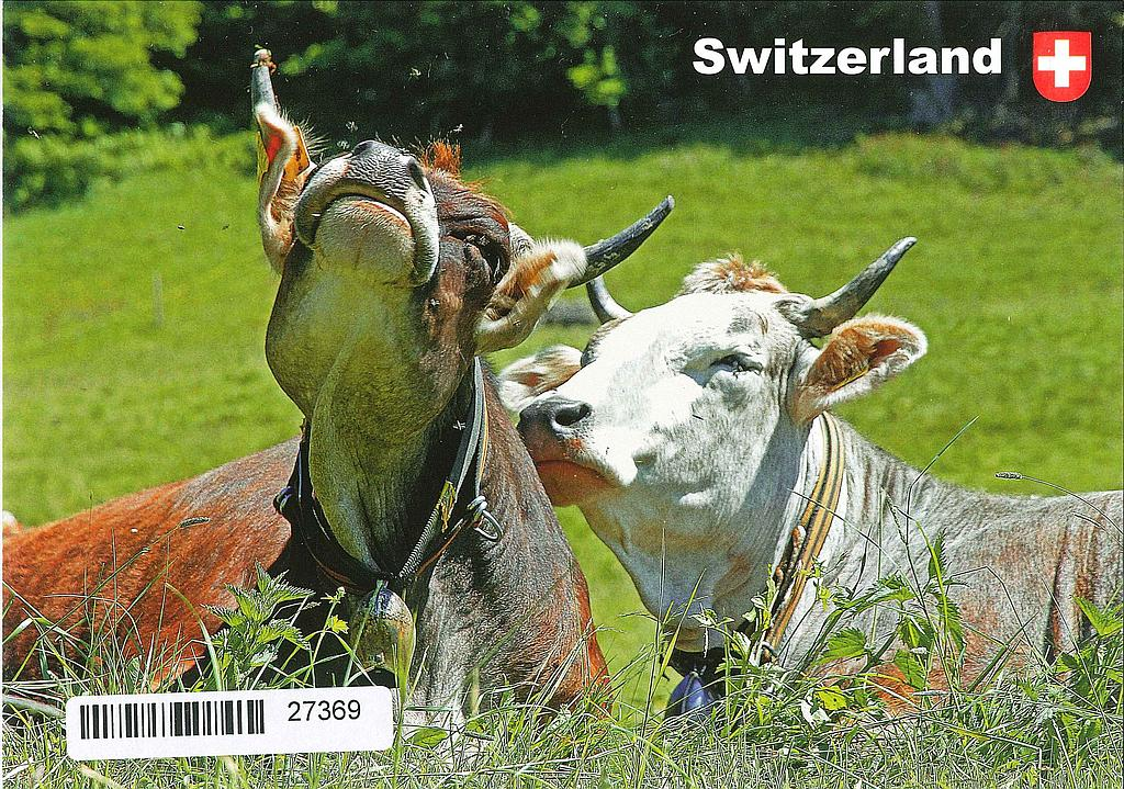 "Postcards 27369 Vaches ""Switzerland"""