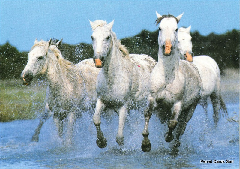 Postcards Horse7 (16 x Fr. 1.- Liq.) Chevaux