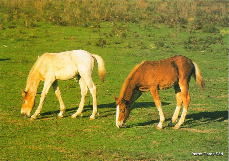 Postcards Horse8 (17 x Fr. 1.- Liq.) Chevaux
